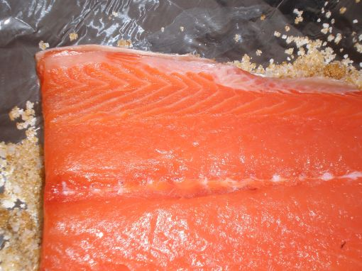 Salmon sits on top of the dry cure