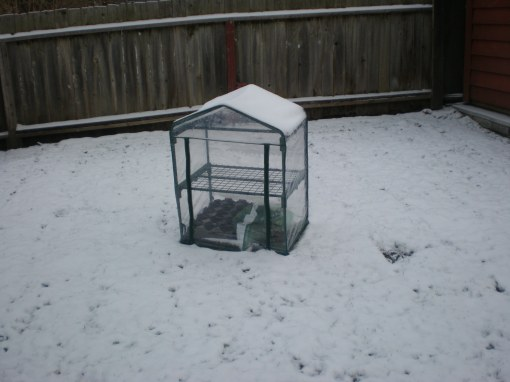 I understand that these are not ideal conditions for a greenhouse